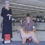 Ch. Hollywood's Dagwood Bumstead  15 months